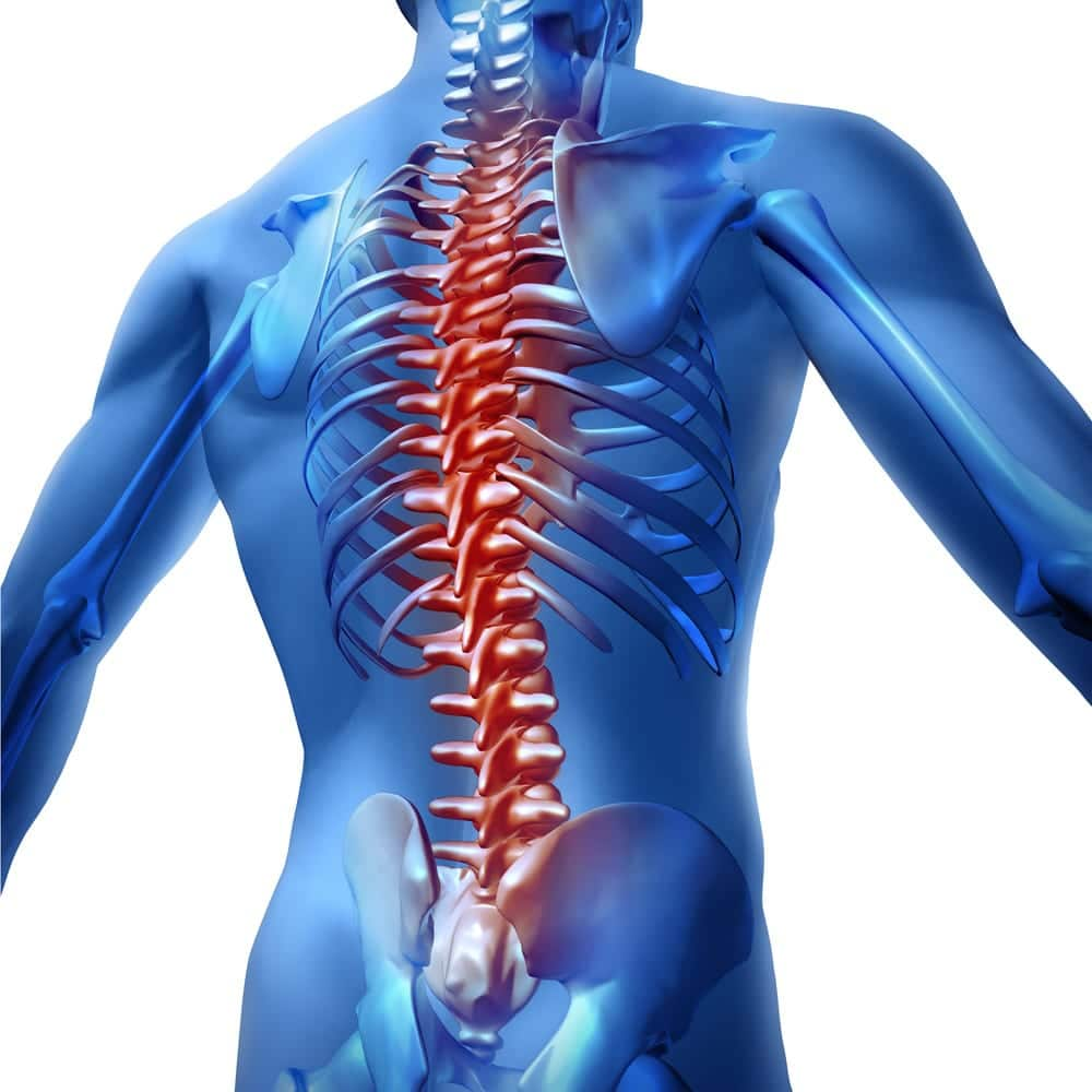 Visual of back pain. Upper torso body skeleton showing the spine and vertebral column highlighted red